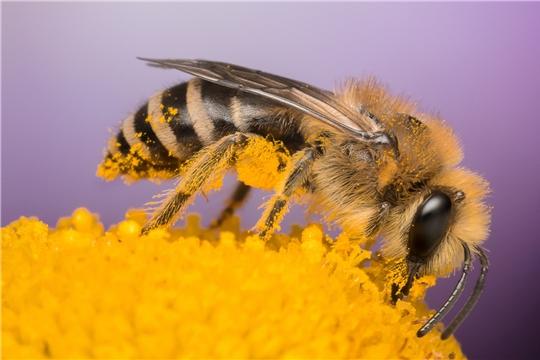 Закон о развитии пчеловодства принят Госдумой