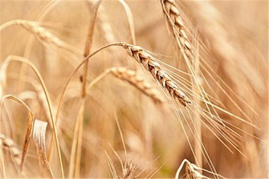Аграриям Чувашии в нынешнем году оказана господдержка в 3,4 млрд. рублей