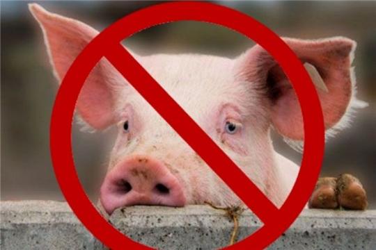 О сложной эпизоотической ситуации по африканской чуме свиней