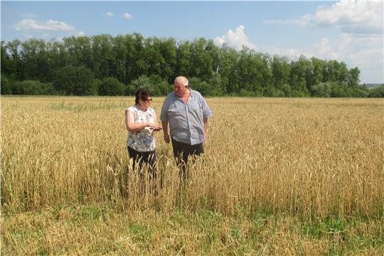 Началась уборка зерновых в Алатырском районе