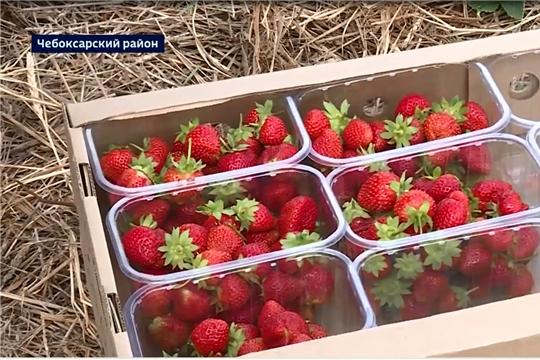 Объявлен конкурс на получение гранта «Перспектива» на сыроделание, яговодство, тепличное овощеводство