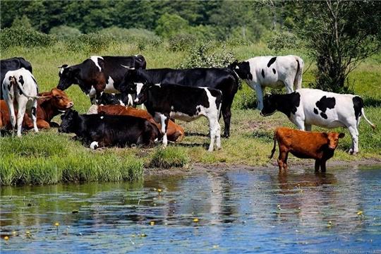 На 5 июля гражданам республики перечислено 100,8 млн. рублей субсидий на содержание коров
