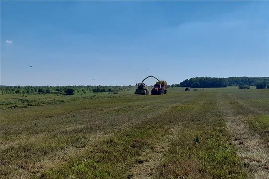Заготовка кормов в Чебоксарском районе