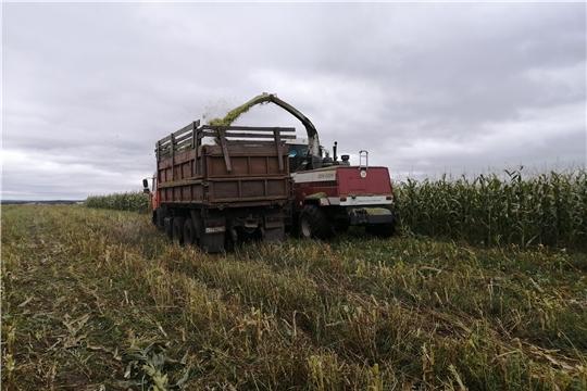 Уборка кукурузы в Ибресинском районе близка к завершению