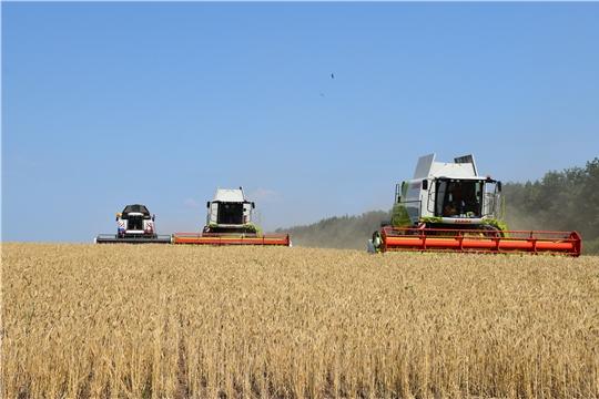 В Красноармейском районе приступили к уборке зерновых культур