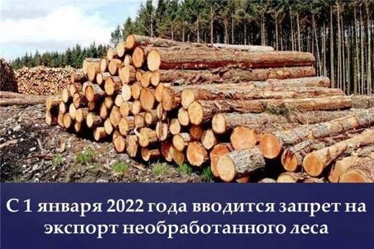 В России с 2022 года запрещен экспорт необработанной древесины