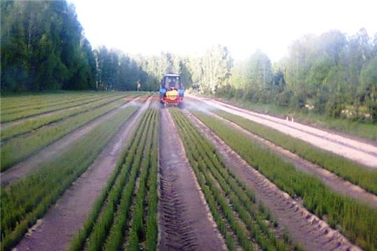 В лесничествах республики продолжаются работы по агротехническому уходу за лесными культурами