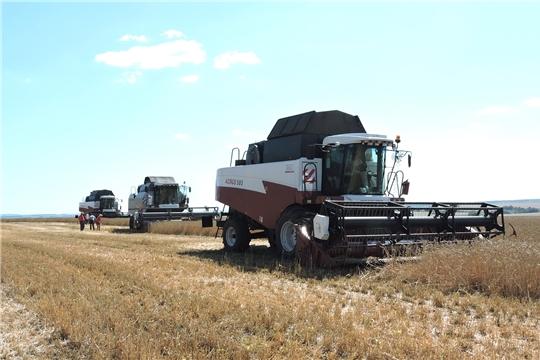 В хозяйстве «Яманчурино» Яльчикского района первыми в республике вышли на уборку зерновых