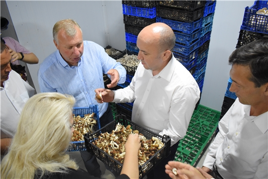 В Моргаушском районе грибы растут круглый год