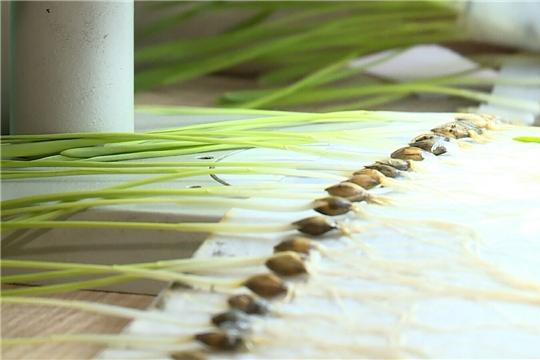 Подготовка к посевной начинается с семян