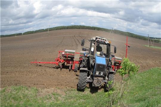В хозяйствах Аликовского района  завершаются весенне-полевые работы