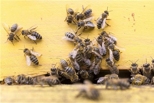 Россельхозцентр напоминает об обеспечении безопасности пасек при применении пестицидов