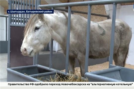 В селе Шыгырдан Батыревского района открылась новая лошадиная ферма