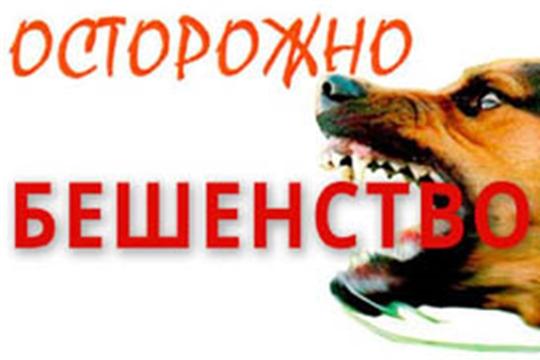 Установлены ограничительные мероприятия (карантин) по бешенству на территории д. Клычево Чебоксарского района