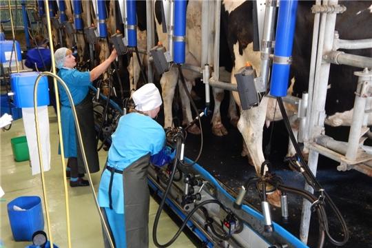 12-13 мая состоится республиканский конкурс зоотехников - селекционеров и мастеров машинного доения коров