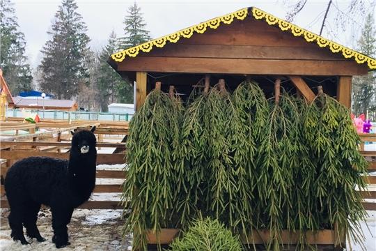В Чебоксарах объявили традиционный сбор елок для животных