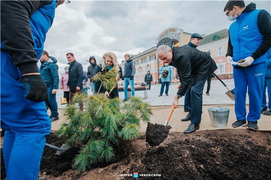 В Чебоксарах приступили ко второму этапу озеленения Красной площади