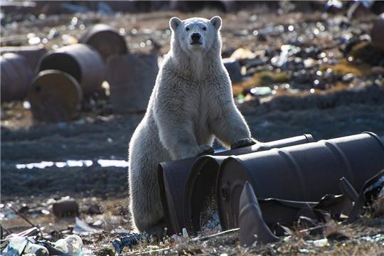 Россия без мусора: ВООП и National Geographic запускают совместный спецпроект