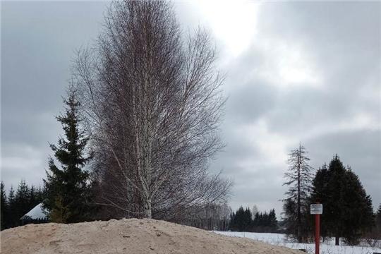 В Шумерлинском лесничестве созданы снежные бурты для консервации посадочного материала