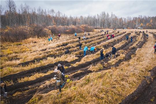 Проект «Посади лес» приглашает российские компании погасить свой углеродный след