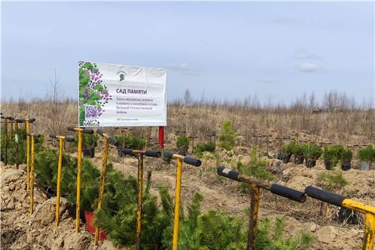 В ходе Международной акции «Сад памяти» в Заволжье высадили 5 тысяч деревьев