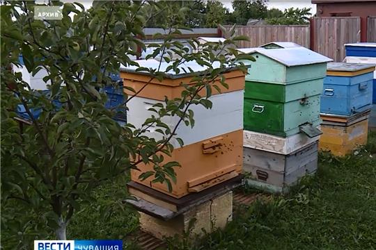 В Минсельхозе Чувашии обсудили проблемы пчеловодов