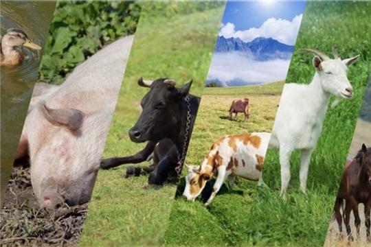 В России утвержден новый образовательный стандарт по специальности «ветеринария»