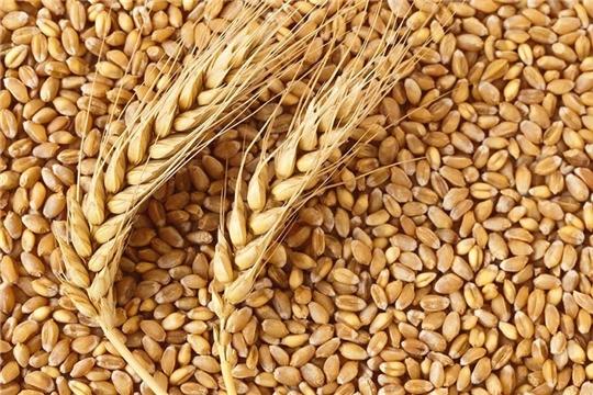 В хозяйствах республики продолжается работа по подработке семян до базисных кондиций.