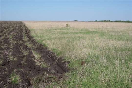 В Аликовском районе необрабатываемые земли вводят в оборот