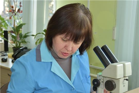 В преддверии посевной специалисты Россельхозцентра проводят фитопатологическую экспертизу семян