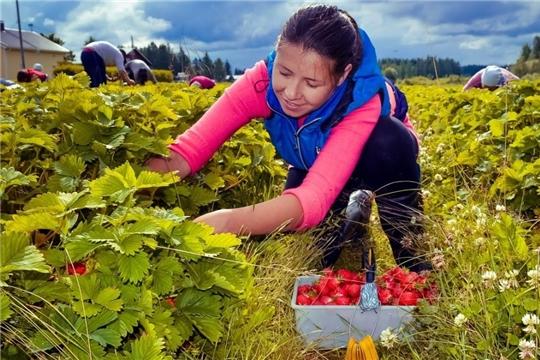 Вместо сезонных мигрантов к полевым работам будут привлекать студентов