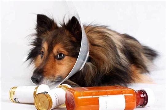 Определены лидеры аптечной деятельности и продаж ветеринарных препаратов  Чувашпотребсоюза за 2020 год.