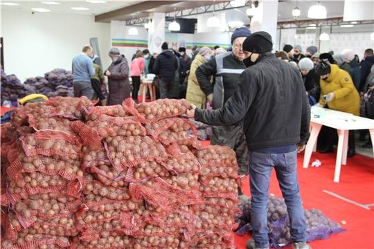 В первый день выставки «Картофель-2021» реализовано 26 тонн семенного картофеля