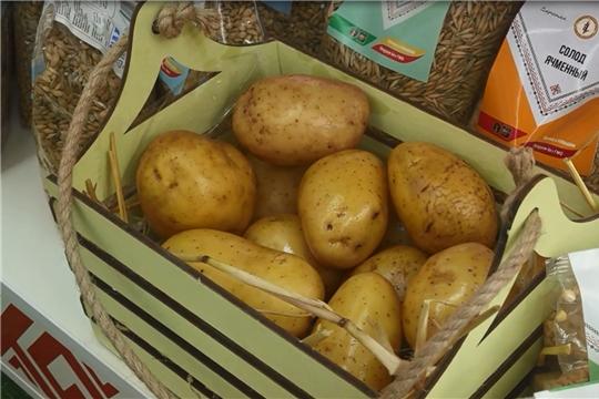 В Чебоксарах проходит межрегиональная отраслевая выставка «Картофель 2021»