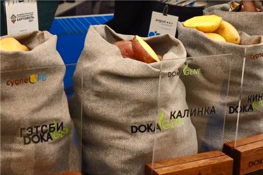 На выставке в Чебоксарах представили различные сорта семенного картофеля