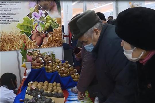 Лучшие сорта картофеля, удобрения, техника и всевозможные новации на выставке _Картофель-2021