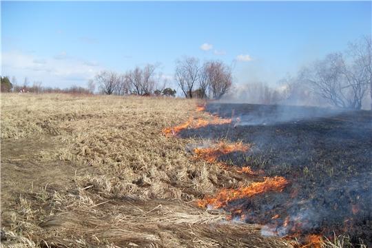 За сжигание травы фермеров оставят без субсидий