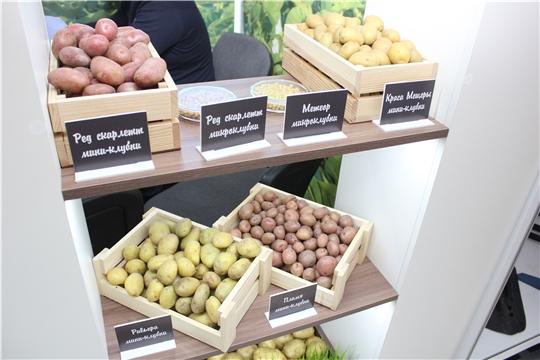 Межрегиональную выставку«Картофель-2021» посетили более 10 тыс. человек