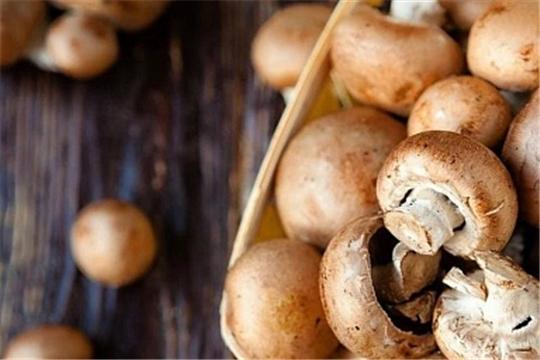 Производство культивируемых грибов выросло на 80,2% в 2020 году