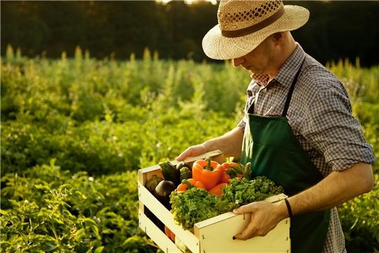 Фермеры получат право продавать продукцию там, где она была произведена