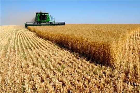 Аграрии Чувашии смогут возмещать до 50% затрат на производство и реализацию зерновых культур.