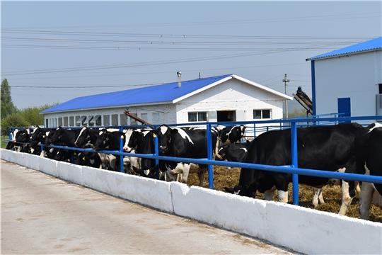 Открытие республиканского конкурса зоотехников - селекционеров и мастеров машинного доения коров