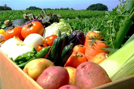 Производство овощей закрытого грунта в Чувашии выросло в 2,4 раза