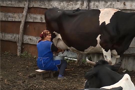 В Чувашии на поддержку владельцев коров выделили 171 млн рублей