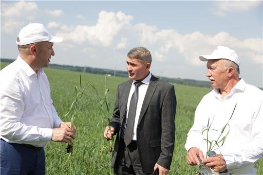 На 31 мая на полях республики посеяно 204,7 тыс. га яровых зерновых и зернобобовых культур