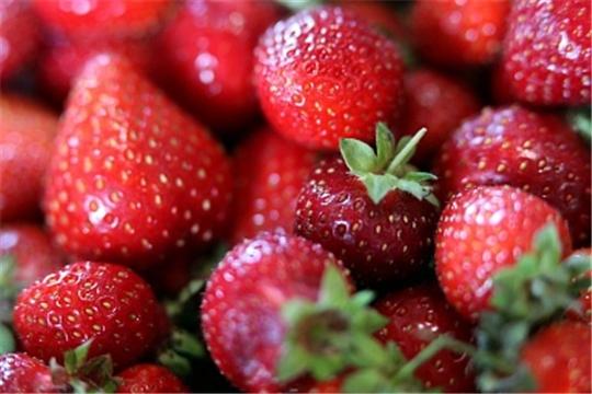 Производство земляники садовой в России увеличилось на 16,7%