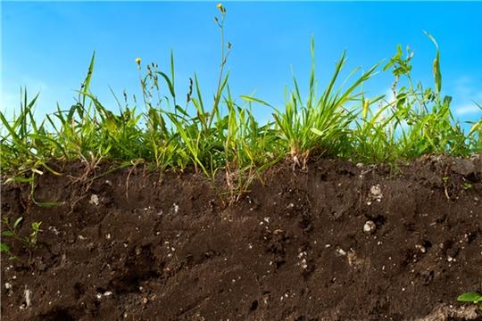 Кабмин утвердил требования к плану восстановления плодородия сельхозземель