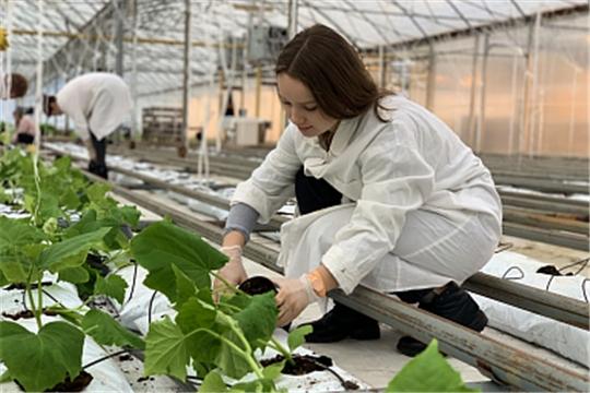 В 2021 году Минсельхоз России поможет трудоустроить более 4,5 тысяч студентов аграрных вузов