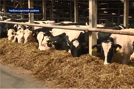 Аграриям Чувашии предстоит запасти 700 тысяч тонн сена, сенажа и силоса