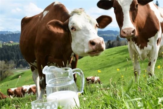 Сельчанам, которые получили субсидии на содержание коров, необходимо до конца января предоставить отчет